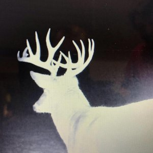 trail cam pictures of my 2018 whitetail